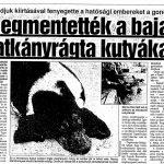 Megmentették a bajai patkányrágta kutyákat