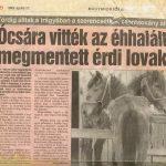 Érdi lovak