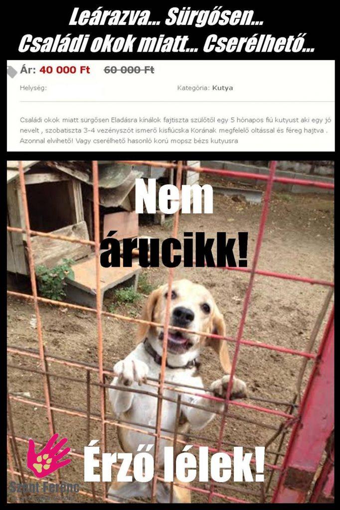 mielott_kutyat_valasztasz3